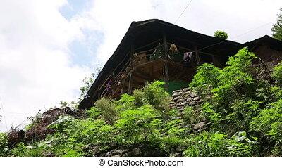 Marijuana farm in front of farmer's home, Nepal Kathmandu.