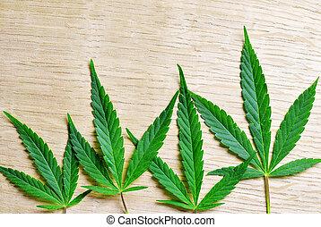 marijuana., folha cânhamo