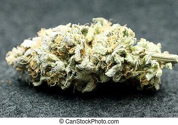 marijuana, germoglio