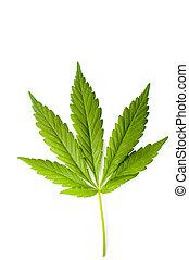 marijuana lap, elszigetelt, képben látható, egy, fehér