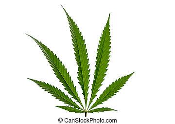 marijuana lap, elszigetelt, white, háttér