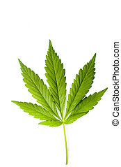 Marijuana leaf isolated on a white