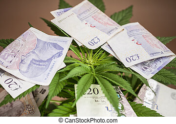 marijuana, negócio