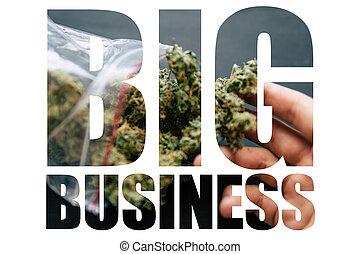 marijuana, negocio grande, blanco, fondo., macro, tiro, de, cannabis, flores, con, trichomes, en, un, escalas, con, un