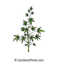 Marijuana plant. Cannabis tree. Vector illustration. Isolated object.