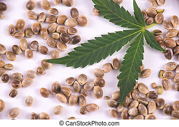 Marijuana seeds and leaf over white background - cannabis growing concept