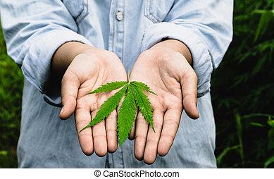 marijuana, segurando mão