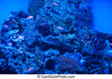 marina, diferente, animales