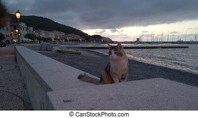 marina, marciana, femme, chat, nuit