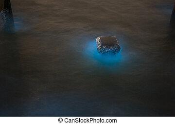 marina, plancton