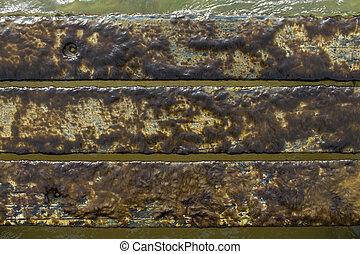 Marine algae - Brown filamentous brown algae growing on wet...