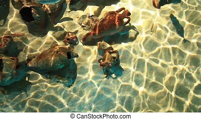 aquarium - marine aquarium and marine life