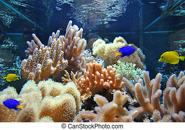 Marine aquarium corals and fish