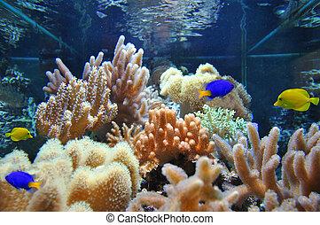 Marine aquarium corals and fish