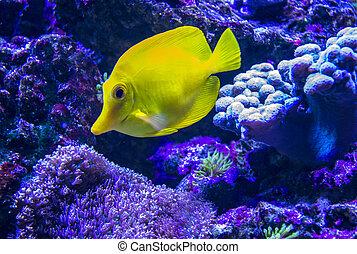marine aquarium fish fox