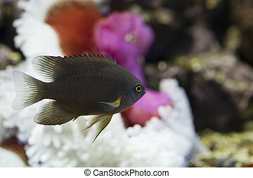 marine aquarium fish tank - tropical animal in a salt water...