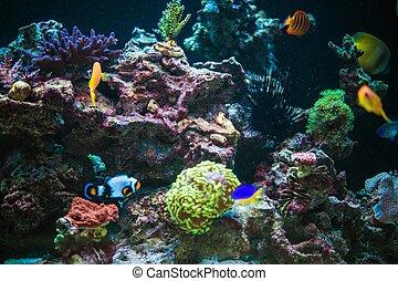 Marine Aquarium Reef and Tropical Fishes. Marine Plants and ...