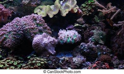 Marine aquarium with corals, anemones and sea fish