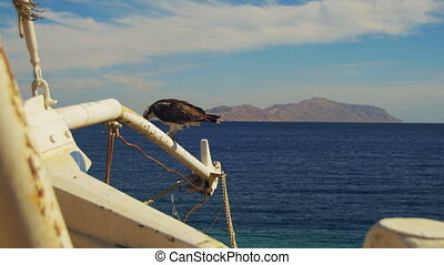 Marine Bird of Prey Osprey Sits on the Mast of the Ship's Bow Against Background of Red Sea and Egypt Mountains in Sinai. Red Sea Bird in Egypt. Pandion haliaetus.