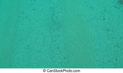 marine fish are swimming along the sandy bottom.
