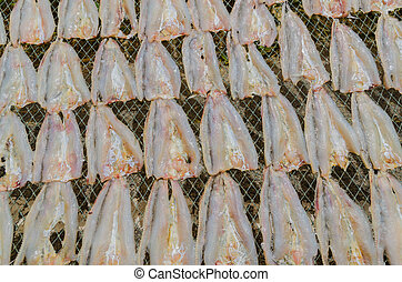 Marine fish drying by the sunlight