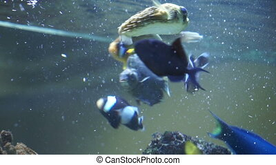 Marine fish in the aquarium