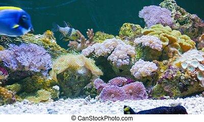 Marine fish in the beautiful underwater scenery in the aquarium
