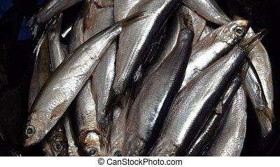 Marine fish sprat is rotated in the plate. dark key.
