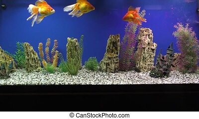 Marine fishes in the Aquarium