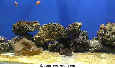 Marine fishes in the Aquarium
