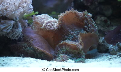 Marine fungus in an aquarium - Plants on the bottom of...