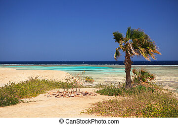 Marsa Alam - Marine landscape of Marsa Alam (Red Sea), Egypt