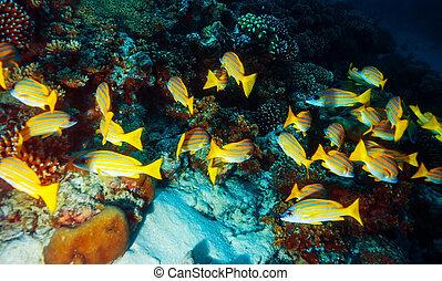 Marine life background - Beautiful marine life, abstract ...