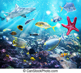 Marine life - Colourful fish and marine vegetation undersea...