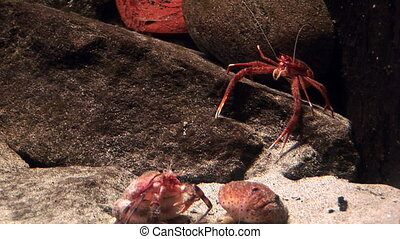 Marine life - Crabs in the aquatic environment - Video high...