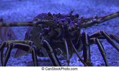 Marine Life Crawling In Ocean