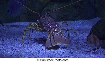Marine Life Crawling Undersea