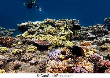 Marine life - Diver photographing marine life