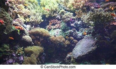 Marine Life Fish Coral Undersea