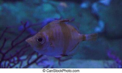 Marine Life Fish Floating