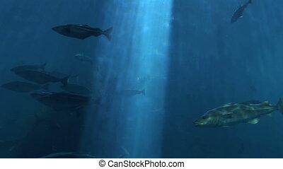 Marine life - Fish