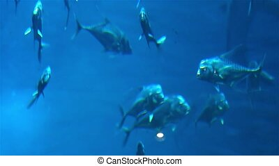 Marine life. Large aquarium with lots of fish. Aquarium at...