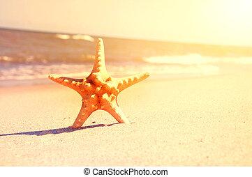 Marine life. Starfish on the sunny beach.