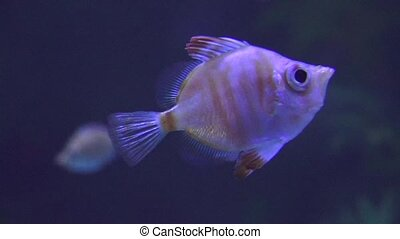 Marine Life Swimming Fish