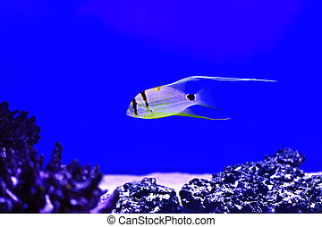 Marine life - The marine life of the Indian Ocean in the ...