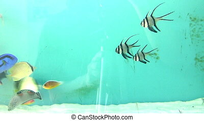 Marine life, tropical Fish on a coral reef.