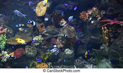tropical fish on the reef