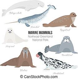 Marine mammal set. Walrus, narwhal, harp, bearded, ringed, hooded seal, beluga whale. Seal animal polar collection