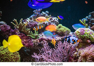 Reef and Tropical Fishes - Marine Plants and Animals in an ...