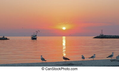 Marine scene with boat and seagulls at sunset